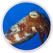 Broadclub Cuttlefish, Papua New Guinea Round Beach Towel