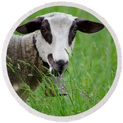 Brown And White Sheep Round Beach Towel