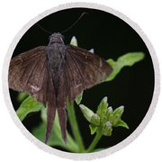Brown Butterfly Dorantes Longtail Round Beach Towel