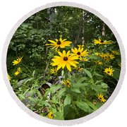 Brown-eyed Susan In The Woods Round Beach Towel by Gary Eason