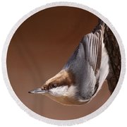 Brown-headed Nuthatch - Little Nutty Round Beach Towel