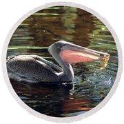 Brown Pelican Afloat Round Beach Towel