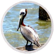 Brown Pelican And Blue Seas Round Beach Towel