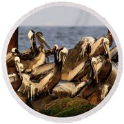 Brown Pelicans - Beauty Of Sand Island Round Beach Towel