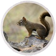 Brown Squirrel In Spokane Round Beach Towel