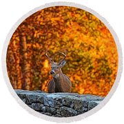 Buck Digital Painting - 01 Round Beach Towel