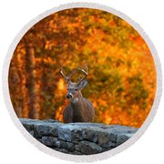 Buck In The Fall 01 Round Beach Towel
