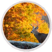 Buck In The Fall 06 Round Beach Towel