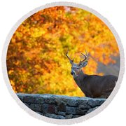 Buck In The Fall 07 Round Beach Towel