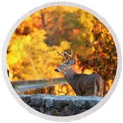 Buck In The Fall 09 Round Beach Towel