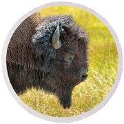 Buffalo Portrait Round Beach Towel