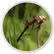 Bug Eyed Dragon Fly Round Beach Towel