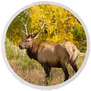 Bull Elk Autum Portrait Round Beach Towel