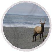 Bull Elk On Calfornia Coast Round Beach Towel