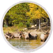 Bull Elk Watching Over Herd 5 Round Beach Towel