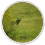 Bull Moose On The Loose  Round Beach Towel