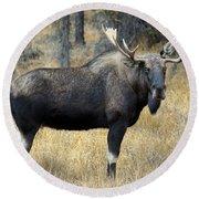 Bull Moose, Peter Lougheed Provincial Round Beach Towel