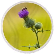 Bull Thistle With Bumble Bee Round Beach Towel