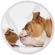 Bulldog & Guinea Pig Round Beach Towel