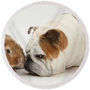 Bulldog And Lionhead-cross Rabbit Round Beach Towel