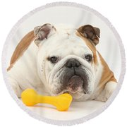 Bulldog With Plastic Chew Toy Round Beach Towel