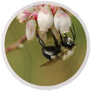 Bumble Bee And Blueberry Blossoms Round Beach Towel