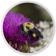 Bumble Bee And Bristle Thistle Round Beach Towel