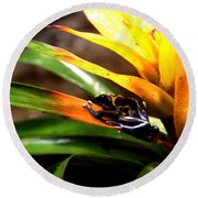 Bumble Bee Dart Frogs Round Beach Towel