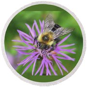 Bumblebee On A Purple Flower Round Beach Towel