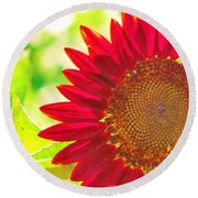 Burgundy Sunflower Round Beach Towel