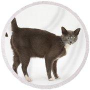 Burmese-cross Cat Round Beach Towel