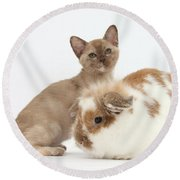 Burmese Kitten And Rabbit Round Beach Towel