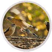 Busy Birds Round Beach Towel