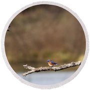 Busy Bluebirds - Three Overlooking The Lake Round Beach Towel