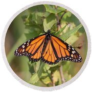 Butterfly - Monarch - Resting Round Beach Towel