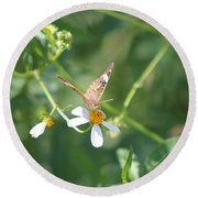 Butterfly 22 Round Beach Towel