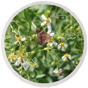 Butterfly 30 Round Beach Towel