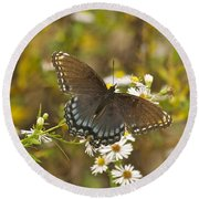 Butterfly 3325 Round Beach Towel