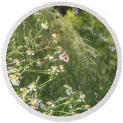Butterfly 49 Round Beach Towel
