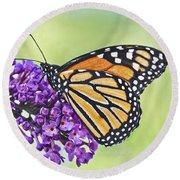 Butterfly Beauty-monarch Round Beach Towel