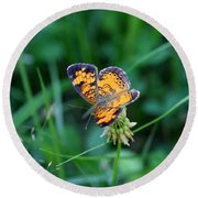Butterfly In Square  Round Beach Towel