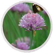 Butterfly On Clover Round Beach Towel