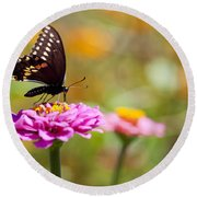 Butterfly On Pink Zinnia Round Beach Towel