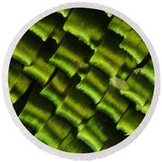 Butterfly Wing Scales Round Beach Towel