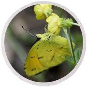 Butterfly - Yellow Sulphur On Yellow Round Beach Towel