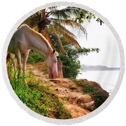 Caballo Blanco Round Beach Towel by Skip Hunt