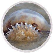 Cabbage Head Jellyfish  Round Beach Towel