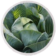 Cabbage In The Vegetable Garden Round Beach Towel