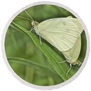 Cabbage White Butterflies 5267 Round Beach Towel