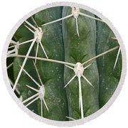 Cactus 61 Round Beach Towel